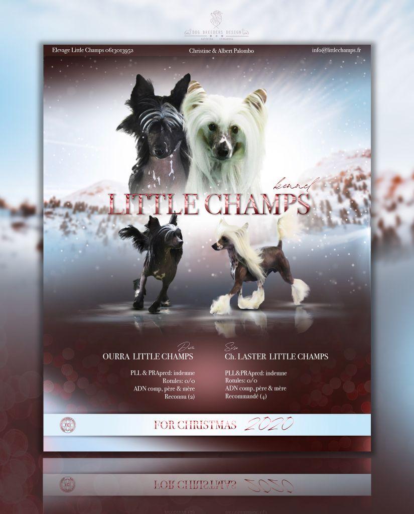 Little Champs - Chien chinois à crête - Portée née le 26/12/2020
