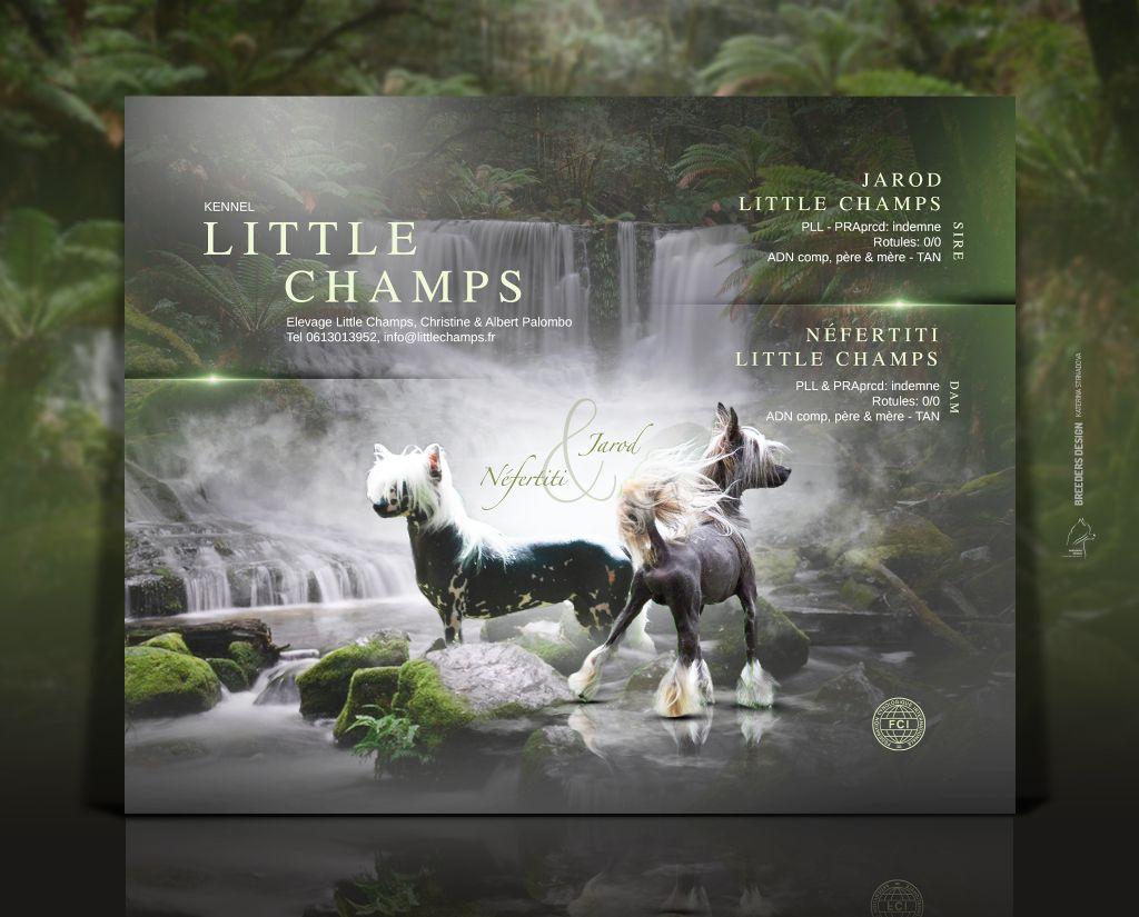 Little Champs - Chien chinois à crête - Portée née le 27/06/2021