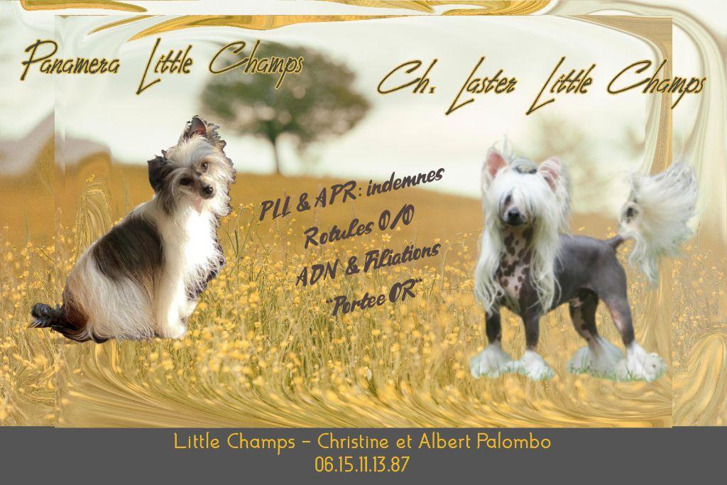 Little Champs - Chien chinois à crête - Portée née le 03/08/2021