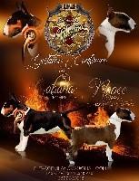 Bull Terrier - Du Mas de la Vilanòva