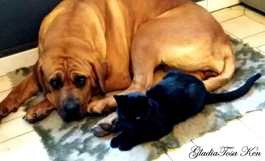leiko tib majestic dog chien de race toutes races en tous departements france inscrit sur chiens. Black Bedroom Furniture Sets. Home Design Ideas