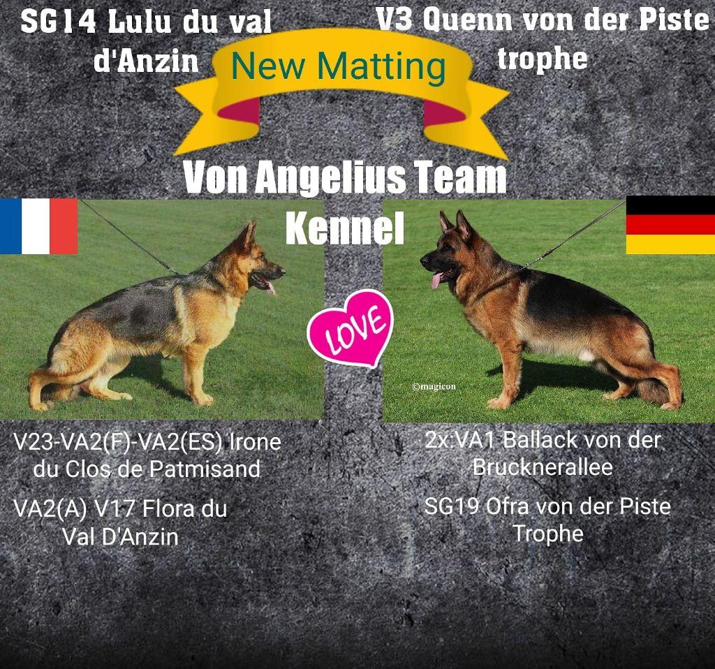Von Angelius Team - Chiot disponible  - Berger allemand