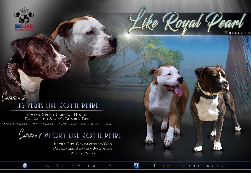 Like Royal Pearl - Gestation confirmée