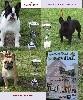- Exposition canine d' Origny Ste Benoite