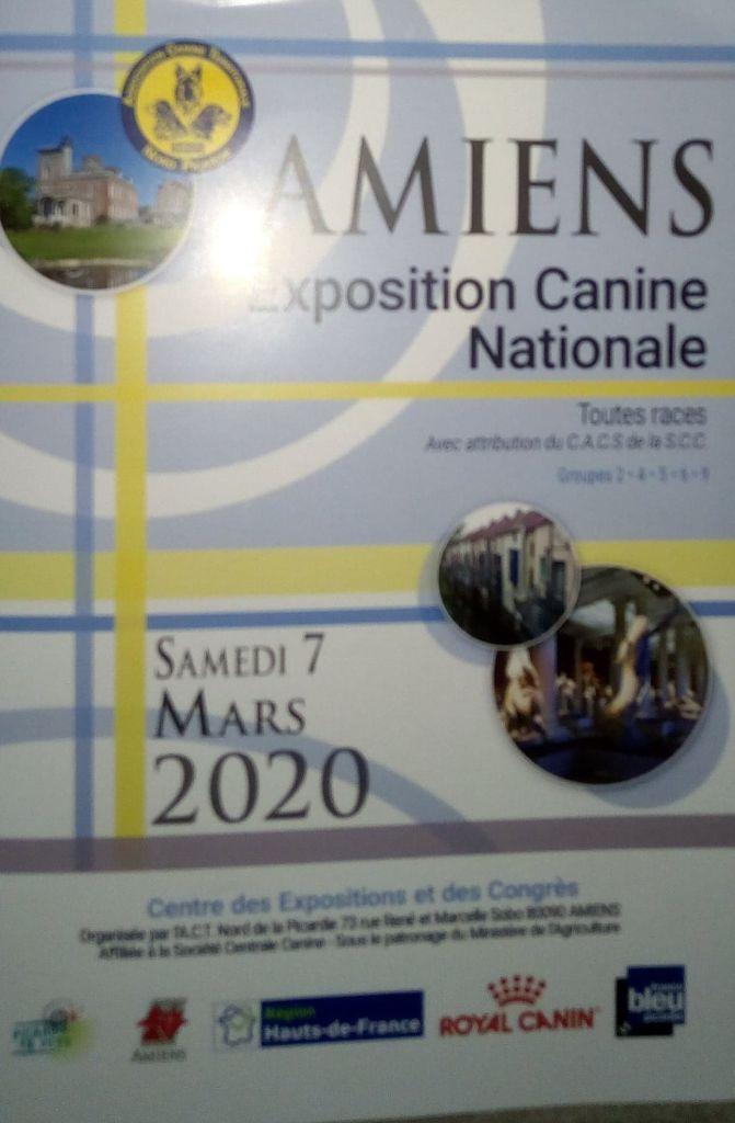 Du Paradis d'Urgo - Exposition canine  Amiens 2020
