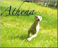 cruisenif Athena the wittelsbach