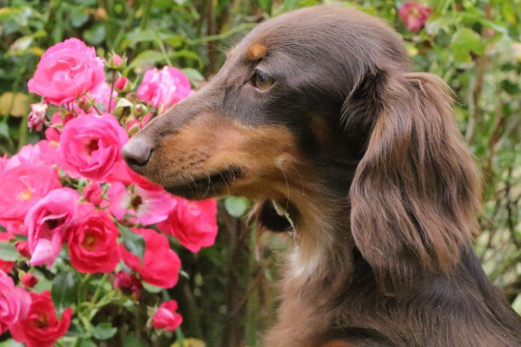Publication : Of German Lovely Dogs