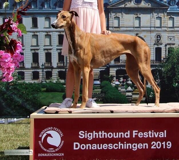 Des Terres De Moïra - Sighthound festival de Donaueschigen  en Allemagne