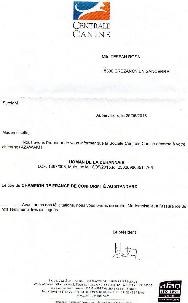 Publication : De La Féline Créole  Auteur : Rosa Teffah