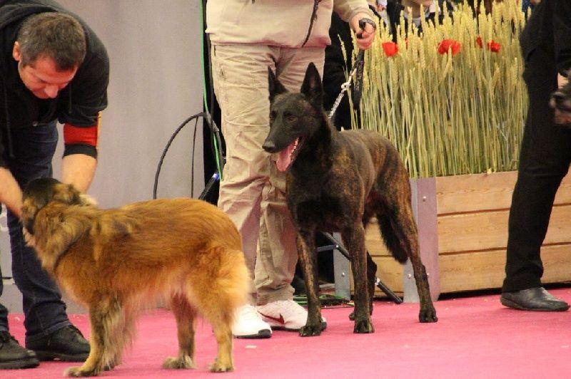 Publication : de la Pommeraie des Loups