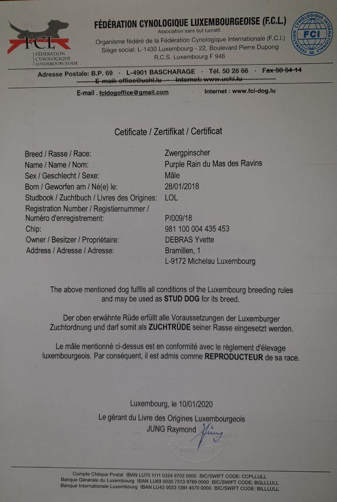 Du Mas Des Ravins - Certificat d'élevage FCL Purple Rain