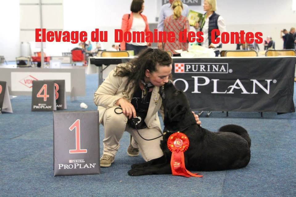 Publication : Du Domaine Des Contes  Auteur : Stella HETZEL