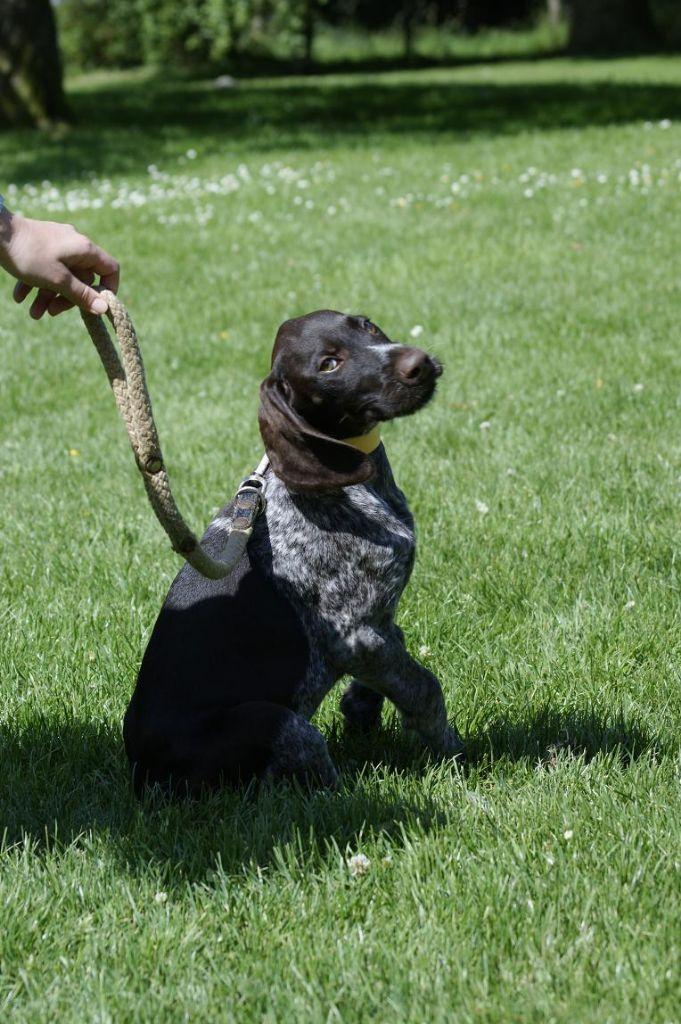 Chiot - Elevage De beaudribos - eleveur de chiens Chien d