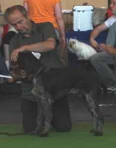 Accueil - Elevage De beaudribos - eleveur de chiens Chien