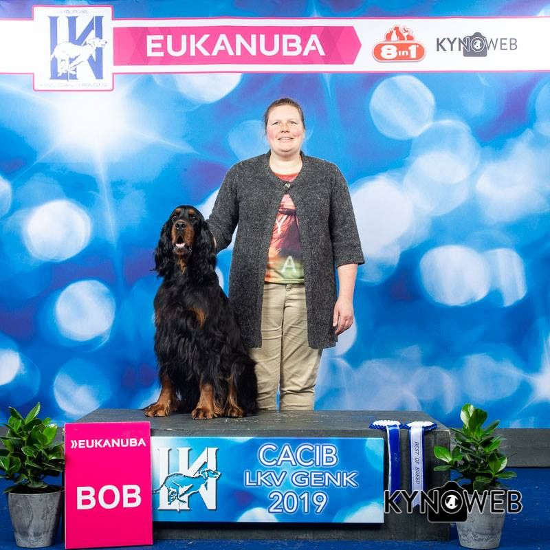 Of The Purple Fallow - Cara gagne le CAC,Stella meilleur minor puppy a Genk.