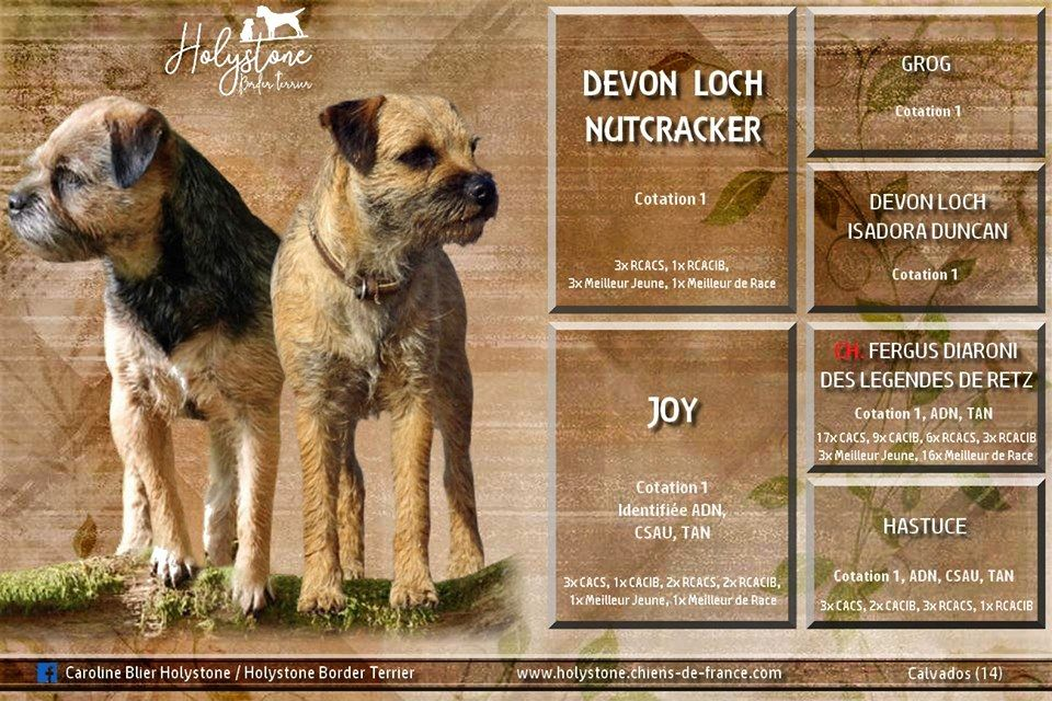 Holystone - Chiot disponible  - Border Terrier
