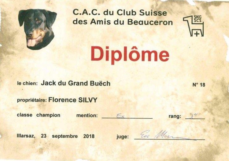 CH. Jack Du Grand Buech