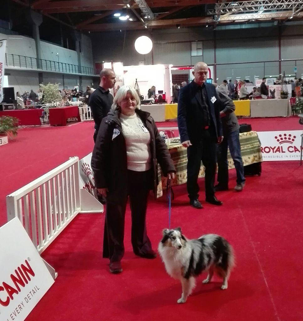 Miss dior De L'Oustaou de Sandy Shetland Sheepdog