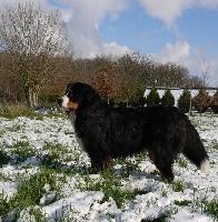 Gwen du domaine des neiges eternelles