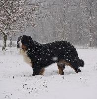Colombine du domaine des neiges eternelles