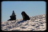 Erwin du domaine des neiges eternelles