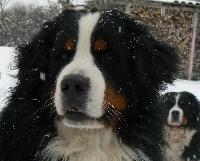 Celtik du domaine des neiges eternelles