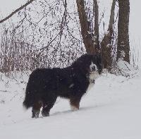 Goliath du domaine des neiges eternelles