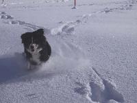 Darwin du domaine des neiges eternelles