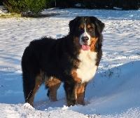 Elwin du domaine des neiges eternelles