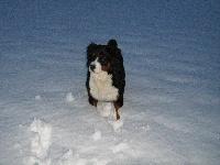 Elfy du domaine des neiges eternelles