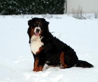 Elwina du domaine des neiges eternelles