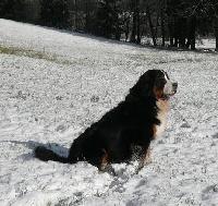 Cador du domaine des neiges eternelles