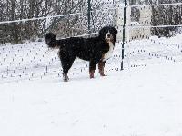 Etoile du domaine des neiges eternelles