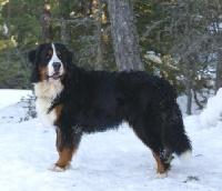 Cooper dit Calwin du domaine des neiges eternelles