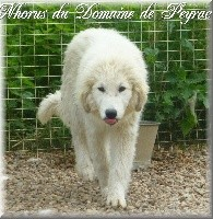 NHORUS DU DOMAINE DE PEYRAC