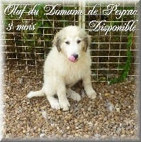 OLAF DU DOMAINE DE PEYRAC
