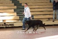 Alonzo royal du parc de Montmacon