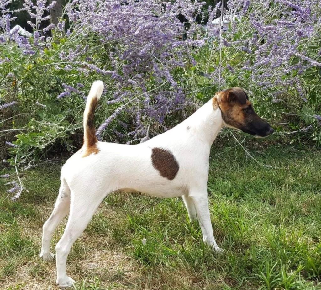 du Manoir Saint Adrien - NATIONAL DOG SHOW - DOMPIERRE-SUR-BESBRE + EPREUVE DE TRAVAIL - 9/9/18