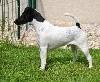 - DOG SHOW CACS CHALETTE - SPECIALE DE RACE