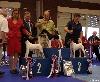 - Nationale d'élevage des Fox-Terriers septembre 2010