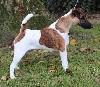 - DOG SHOW NATIONAL CACS MALTOT
