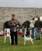 - EUROPEAN FOX-TERRIER WINNER SHOW 2014