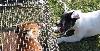 - CACT - Terrier artificiel à Jublains le 26 novembre 2011