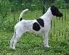 - DOG SHOW INTERNATIONAL CACS/CACIB METZ LE 4 & 5/11/2017