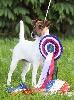 - Nationale d'Elevage des Fox-Terriers septembre 2011