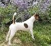 - NATIONAL DOG SHOW - DOMPIERRE-SUR-BESBRE + EPREUVE DE TRAVAIL - 9/9/18