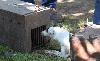- CACT - Terrier artificiel à Jublains le 20 août 2011