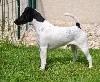 - DOG SHOW CACS/CACIB MACON LE 02/09/2017