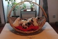Jack Russell Terrier - Du Domaine Des Deux étoiles