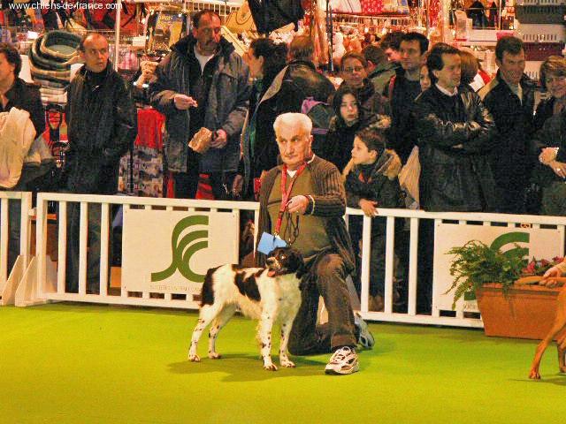 Chien elevage des t 39 chiots picards eleveur de chiens - Salon du chiot paris ...